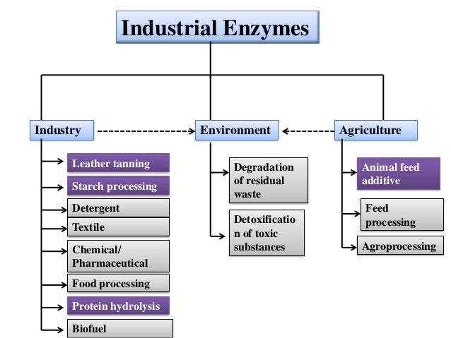 application of enzymes in pharmaceutical industry